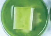 他社溶剤系フッ素樹脂塗料